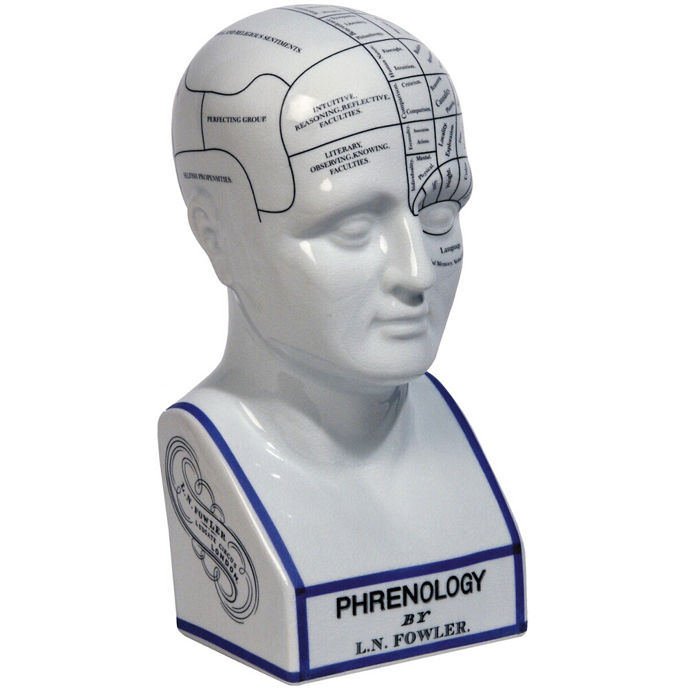 Authentic Models Porcelain Phrenology Head Bust